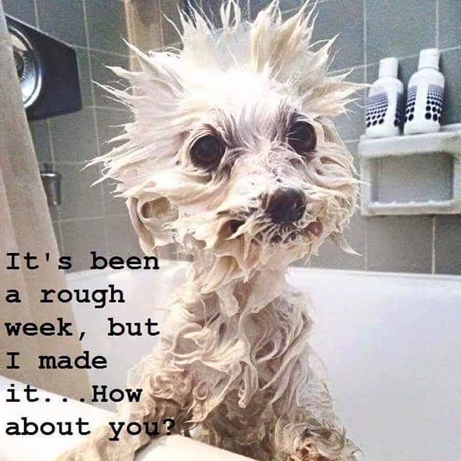 Rough life ...